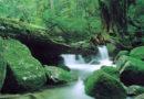 Самые красивые места в Японии для туризма.