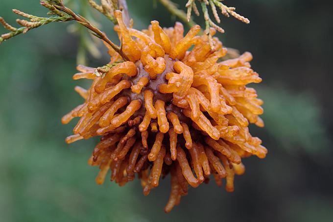 самые страшные растения