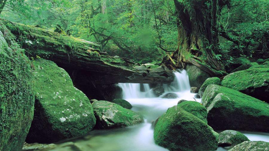Удивительные самые красивые места в Японии