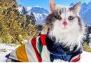 кот и путешествия